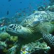 bp-turtle-ocean